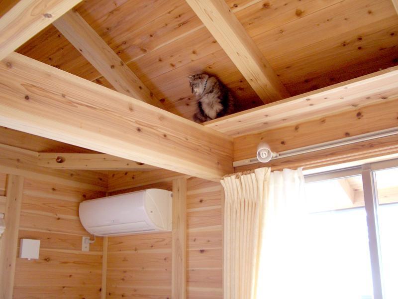 富田林寺池台 I邸 リビングに猫ちゃん用のキャットウォークを。